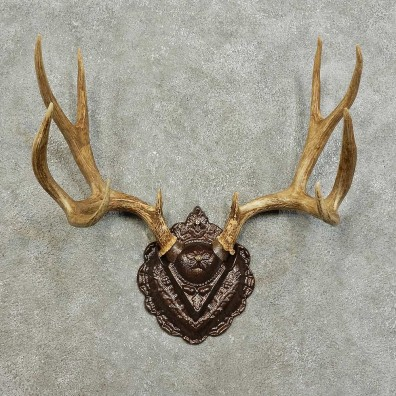 Mule Deer Antler Plaque For Sale #15988 @ The Taxidermy Store