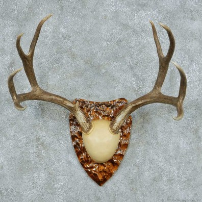 Mule deer antler plaque mount 13775 for sale the taxidermy store