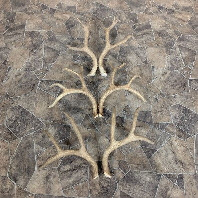 Mule Deer Antler Craft Pack For Sale #21828 @ The Taxidermy Store