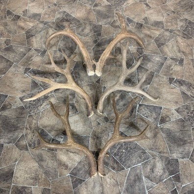 Mule Deer Antler Craft Pack For Sale #21833 @ The Taxidermy Store