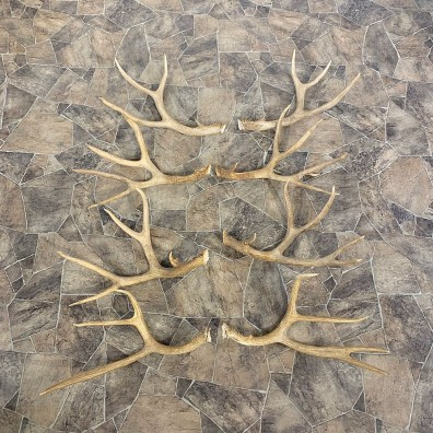 Mule Deer Antler Craft Pack For Sale #23044 @ The Taxidermy Store
