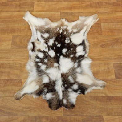 Multi-Color Goat Hide Taxidermy Tanned Skin For Sale #17878 @ The Taxidermy Store