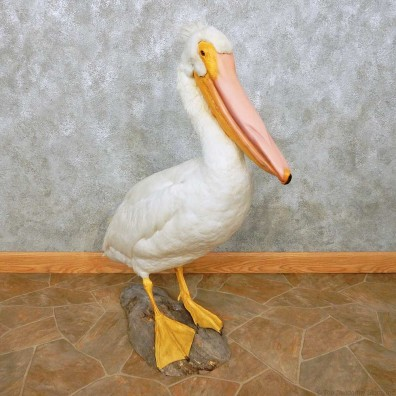Pelican Replica Life-Size Mount For Sale #14526 @ The Taxidermy Store