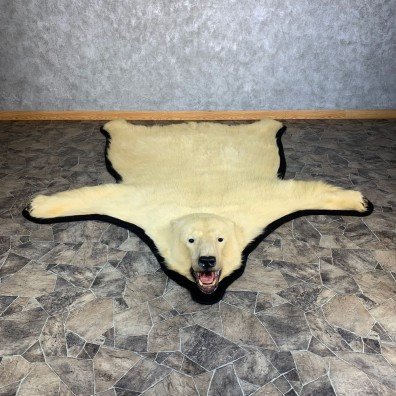 Polar Bear Taxidermy Rug #21235 For Sale @ The Taxidermy Store