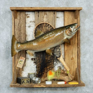 Captain's Classic Rainbow Trout Display Taxidermy Mount #13302 For Sale @ The Taxidermy Store