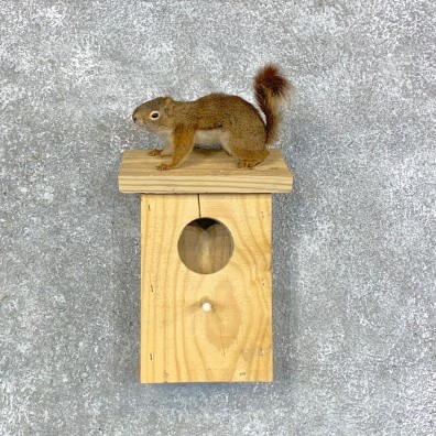 Red Squirrel & Birdhouse Mount For Sale #22917 @ The Taxidermy Store