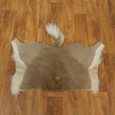 Reedbuck Hide Taxidermy Tanned Skin For Sale #17465 @ The Taxidermy Store