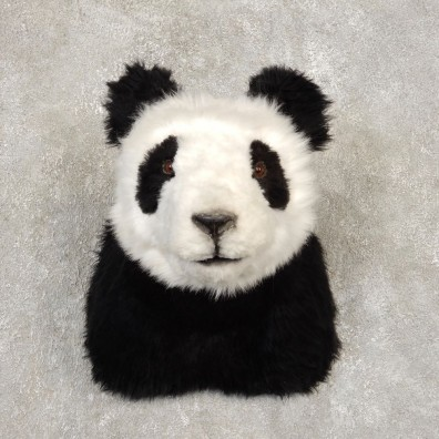 Reproduction Panda Shoulder Mount #21438 For Sale @ The Taxidermy Store