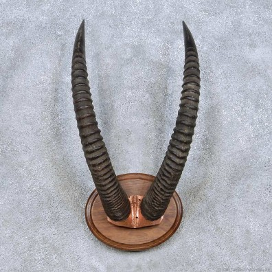 Antelope horn fetish question interesting