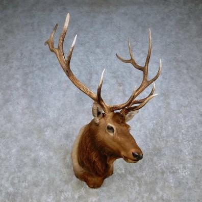Penetration to an elk shoulder