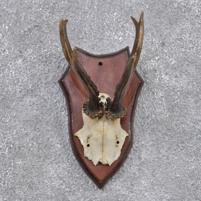 Whitetail Deer Antlers For Sale