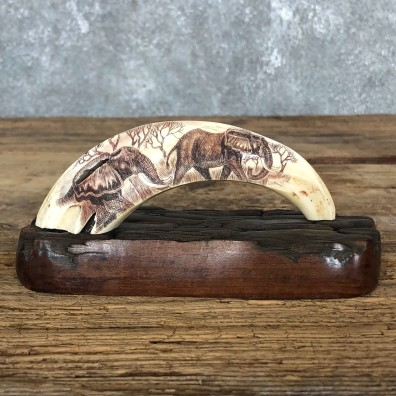 Scrimshawed Warthog Tooth For Sale #19574 @ The Taxidermy Store