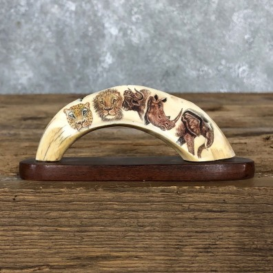 Scrimshawed Warthog Tooth For Sale #19576 @ The Taxidermy Store