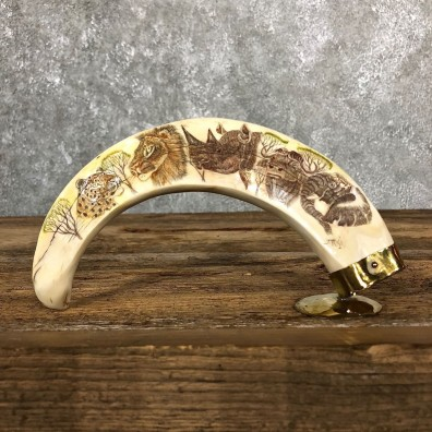 Scrimshawed Warthog Tooth For Sale #19578 @ The Taxidermy Store