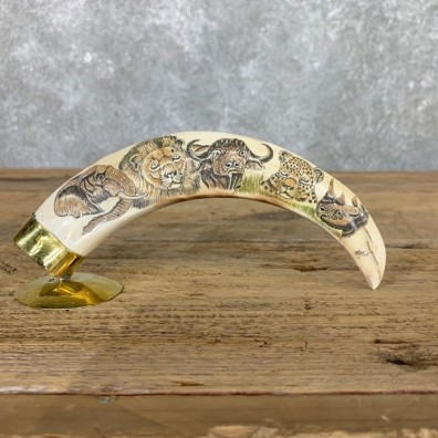 Scrimshawed Warthog Tooth For Sale #22389 @ The Taxidermy Store