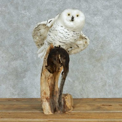 Reproduction Snow Owl Mount #11778 For Sale @ The Taxidermy Store