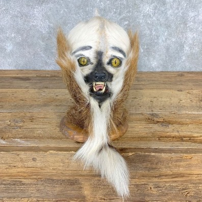 Swamp Booger Novely Mount For Sale #21711 @ The Taxidermy Store