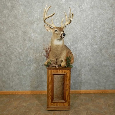 Whitetail Deer 1/2 Life-Size Mount For Sale #15861 @ The Taxidermy Store