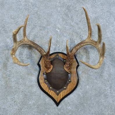 Whitetail Deer Antler Plaque Mount For Sale #15789 @ The Taxidermy Store
