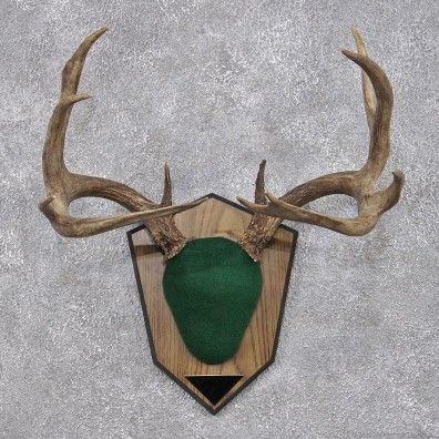 Whitetail Deer Taxidermy Antler Plaque Mount #12424 For Sale @ The Taxidermy Store