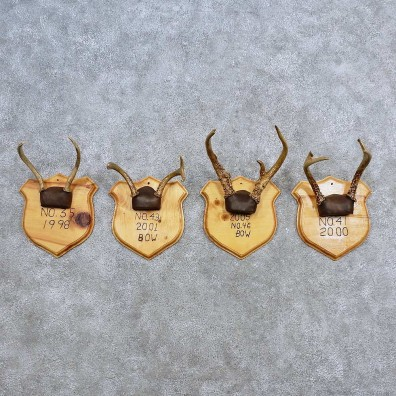 Whitetail Antler Plaque Mounts For Sale #15670 @ The Taxidermy Store