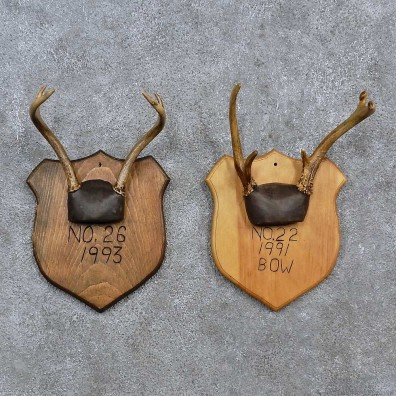 Whitetail Antler Plaque Mounts For Sale #15675 @ The Taxidermy Store