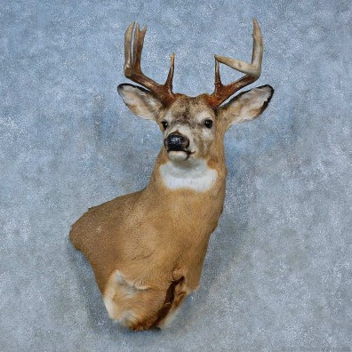 Whitetail Deer Shoulder Mount For Sale #15476 @ The Taxidermy Store