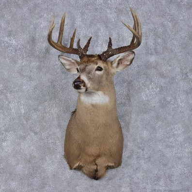 Whitetail Deer Mount For Sale 12488 The Taxidermy Store