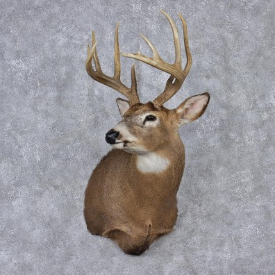 Whitetail Deer Mount For Sale 12523 The Taxidermy Store