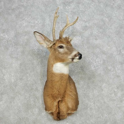Whitetail Deer Taxidermy Shoulder Mount For Sale #14109 @ The Taxidermy Store