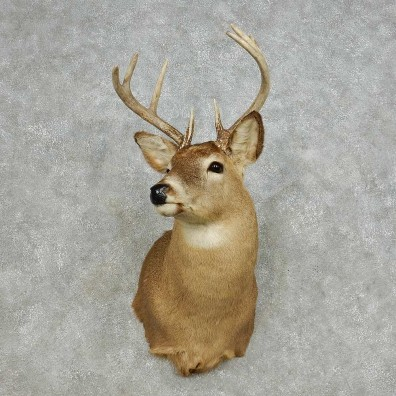 Whitetail Deer Taxidermy Shoulder Mount For Sale #14112 @ The Taxidermy Store