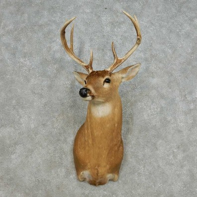 Whitetail Deer Taxidermy Shoulder Mount For Sale #14123 @ The Taxidermy Store