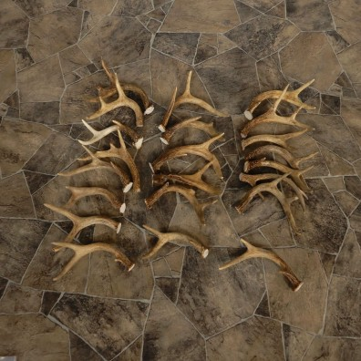 Whitetail Deer Antler Craft Pack For Sale #21339 @ The Taxidermy Store