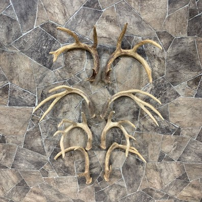 Whitetail Deer Antler Craft Pack For Sale #21820 @ The Taxidermy Store