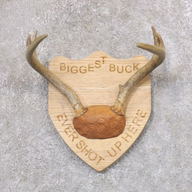 Whitetail Deer Antler Plaque Mount #22356 For Sale @ The Taxidermy Store