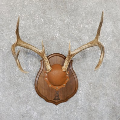 Whitetail Deer Antler Plaque Mount For Sale #18430 @ The Taxidermy Store