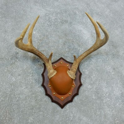 Whitetail Deer Antler Plaque Mount For Sale #18441 @ The Taxidermy Store