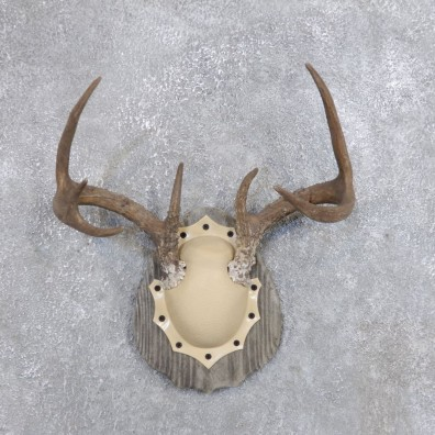 Whitetail Deer Antler Plaque Mount For Sale #18716 @ The Taxidermy Store