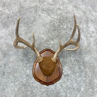 Whitetail Deer Antler Plaque Mount For Sale #22666 @ The Taxidermy Store