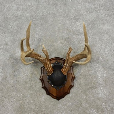 Whitetail Deer Antler Plaque Mount For Sale #17305  @ The Taxidermy Store