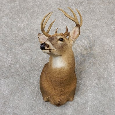Whitetail Deer Shoulder Mount #18818 For Sale - The Taxidermy Store