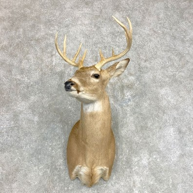 Whitetail Deer Shoulder Mount #22138 For Sale - The Taxidermy Store