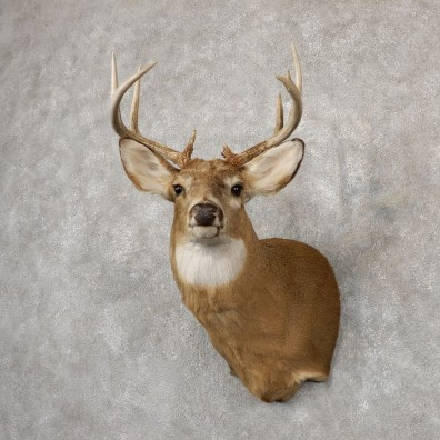 Whitetail Deer Shoulder Mount For Sale #18850 @ The Taxidermy Store