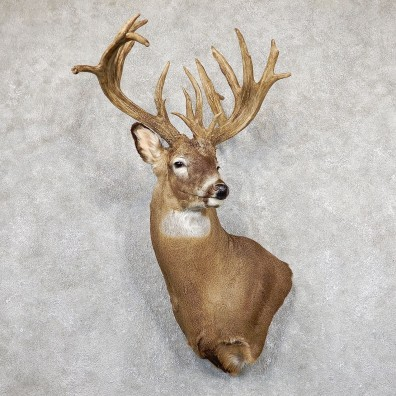 Whitetail Deer Shoulder Mount For Sale #19494 @ The Taxidermy Store