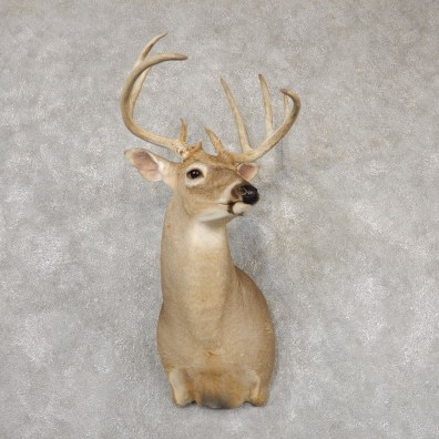 Whitetail Deer Taxidermy Shoulder Mount For Sale #18826 @ The Taxidermy Store