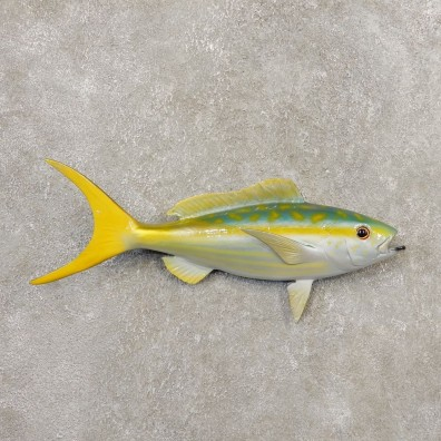 Yellowtail Snapper Replica Fish Mount For Sale #20348 @ The Taxidermy Store
