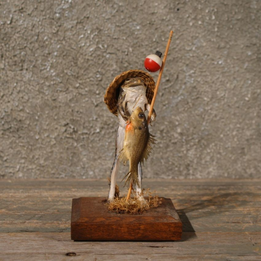 Novelty Bullfrog Mount #10802 - The Taxidermy Store