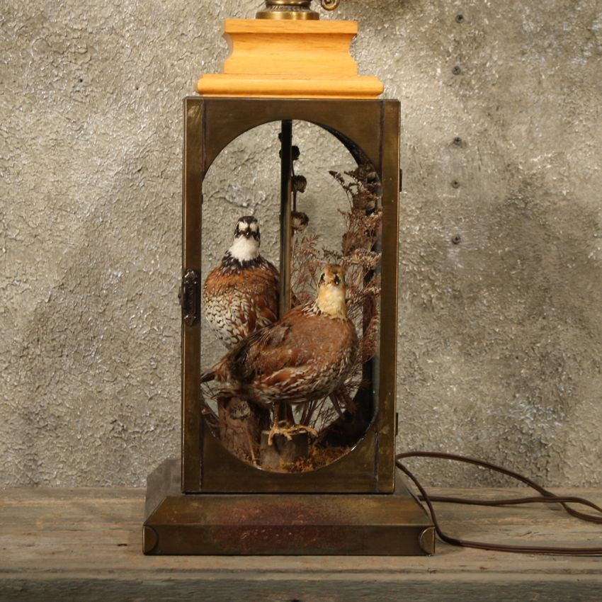 Lamp with Mounted Quail #11134 - The Taxidermy Store