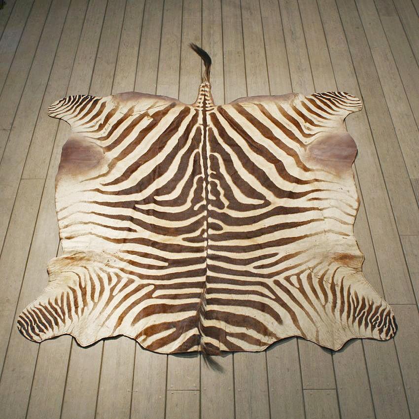 Wonderful Zebra Rug Mount #10960   The Taxidermy Store