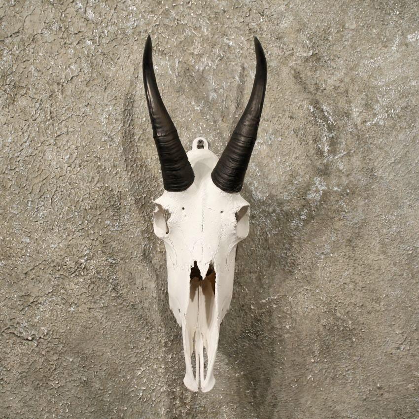 Mountain goat skull - photo#1